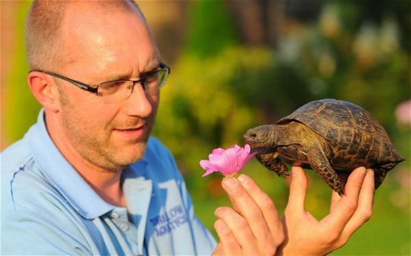 schildkröte als haustier lifestyle trends haustiere
