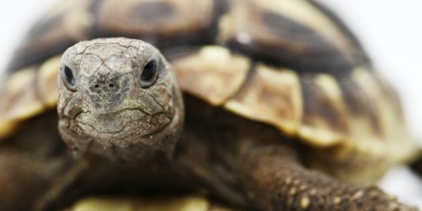 schildkröte als haustier wissenswertes erfahren