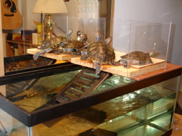 schildkröte haustier aquarium haustiere pflege
