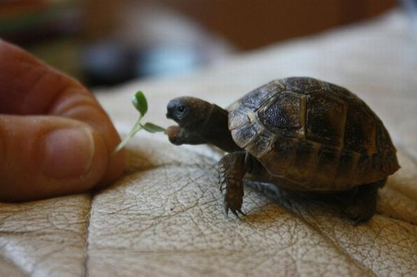 schildkröte haustier ernähren pflege information