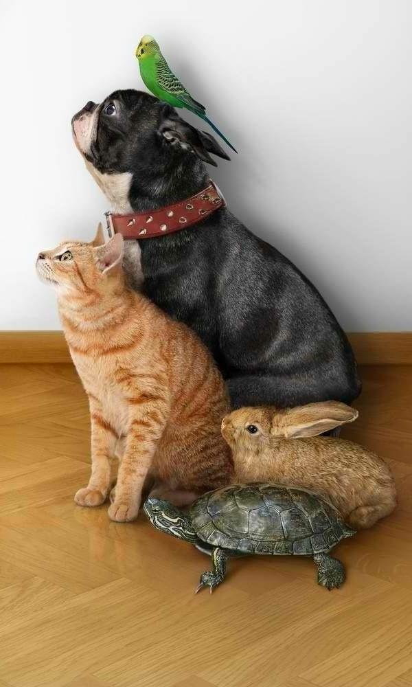 schildkröte haustier haustiere katze hund papagei hase