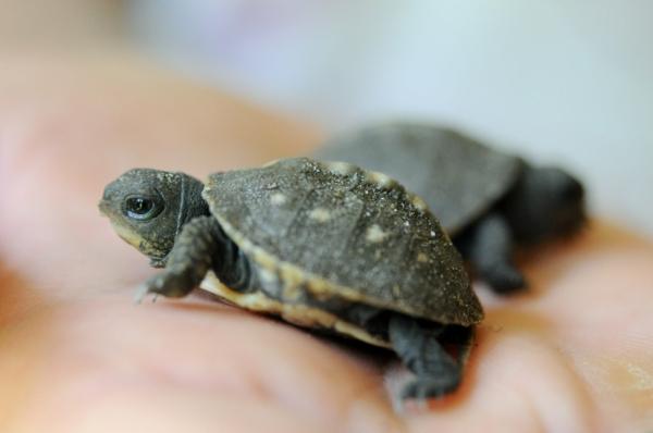 schildkröte haustier lifestyle ausgefallene haustiere