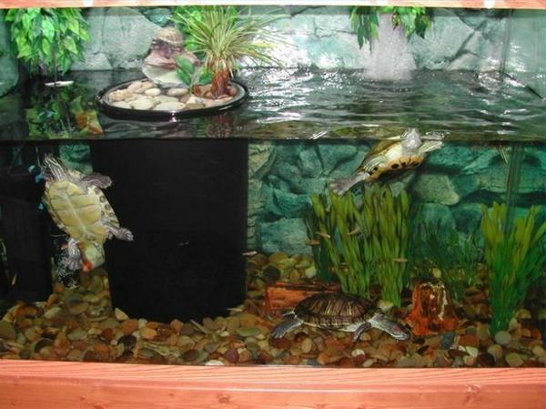 schildkröte haustier wasser aquarium haustiere pflege