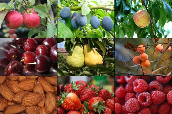 sternzeichen widder frische früchte mandeln