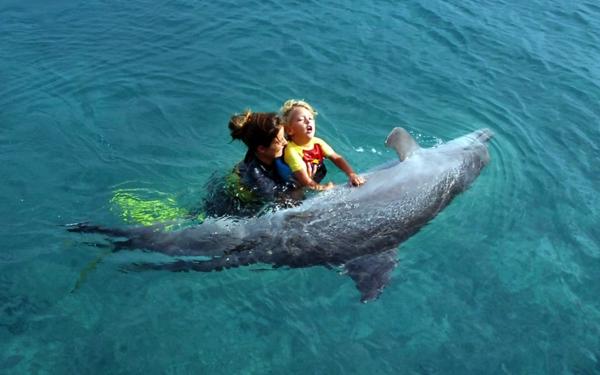 tiergestützte pedagogik tiere als therapie delfintherapie tiertherapie