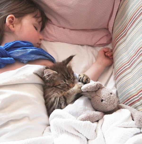 tiergestützte pedagogik tiere als therapie katze tiertherapie
