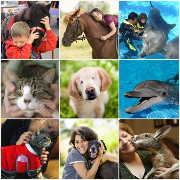 tiergestützte pedagogik tiere als therapie tiertherapie