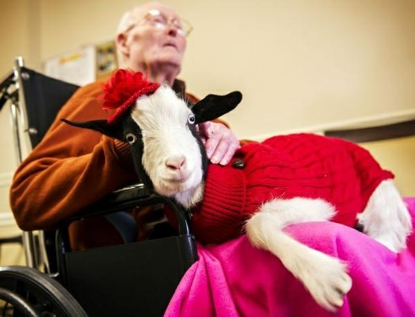 tiertherapie hilft tiere haben eine heilende wirkung auf menschen. Black Bedroom Furniture Sets. Home Design Ideas