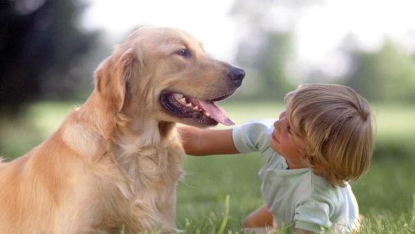 tiertherapie hund tiergestützte therapie tiere als therapie