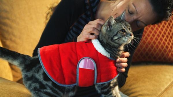 tiertherapie mit katze tiergestützte therapie kinder und tiere