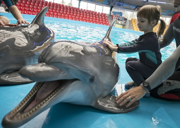 tiertherapie tiere als therapie delfintherapie