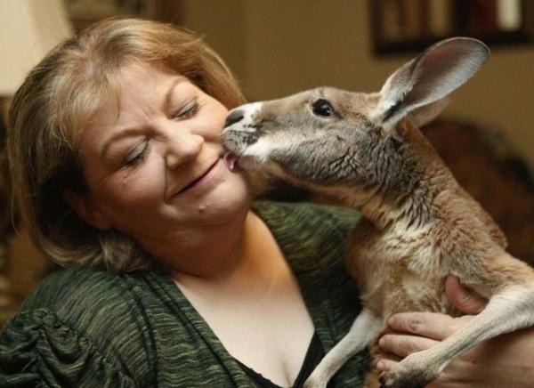 tiertherapie tiere als therapie känguru