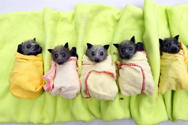 wow haustiere fledermäuse klein