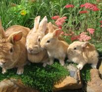 Wow Haustiere Ausgefallene Tiere Die Ihnen Grosse Freude Bereiten