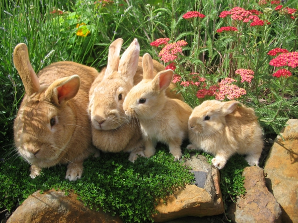 wow haustiere hasenfamilie hase
