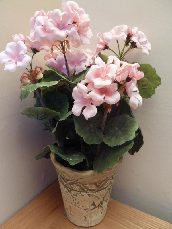 zimmerpflanzen dekoideen Geranium blumentopf