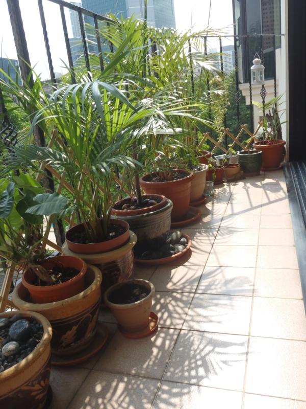 balkonbepflanzung exterieur ideen pflanzen balkon