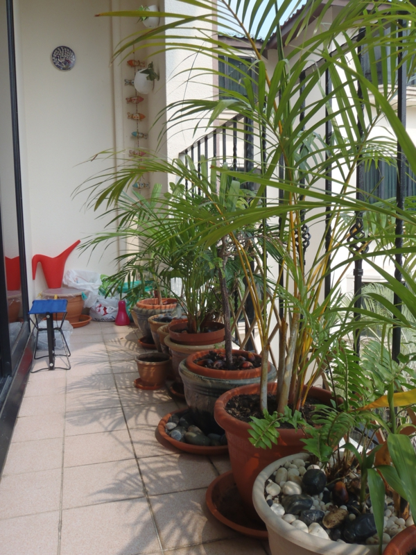 balkonbepflanzung hohe pflanzen balkon gestalten singapur stil