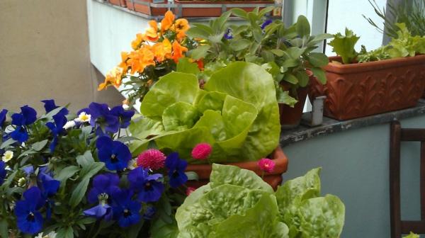 balkonbepflanzung ideen farbige blumen schöner balkon
