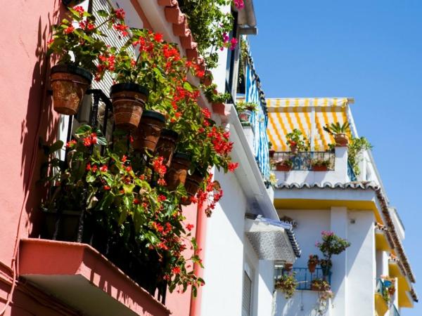 balkonbepflanzung ideen wunderschönen balkon gestalten blumentöpfe