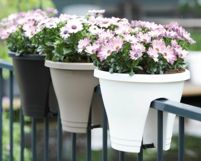 balkonpflanze gänseblümchen den balkon gestalten