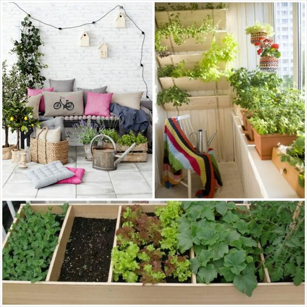 balkonpflanzen blumen gemüse obstpflanzen