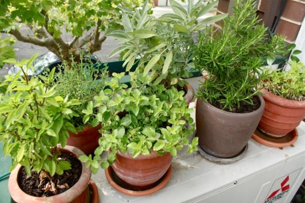 balkonpflanzen blumen küchenkräuter einpflanzen