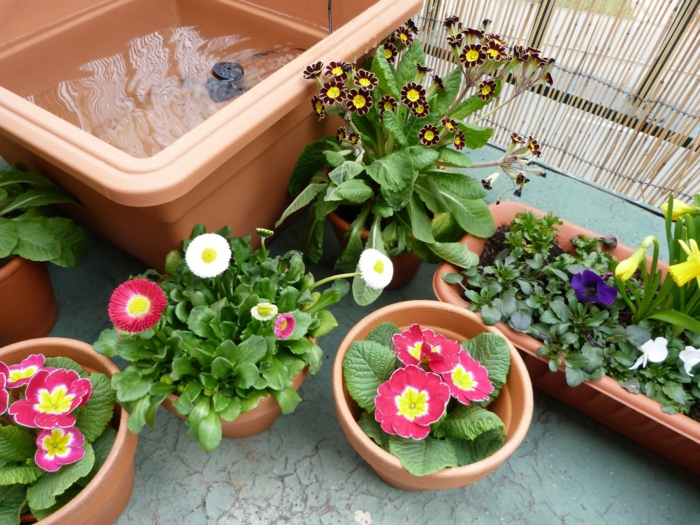 balkonpflanzen gänseblümchen balkonpflanze garten gestalten