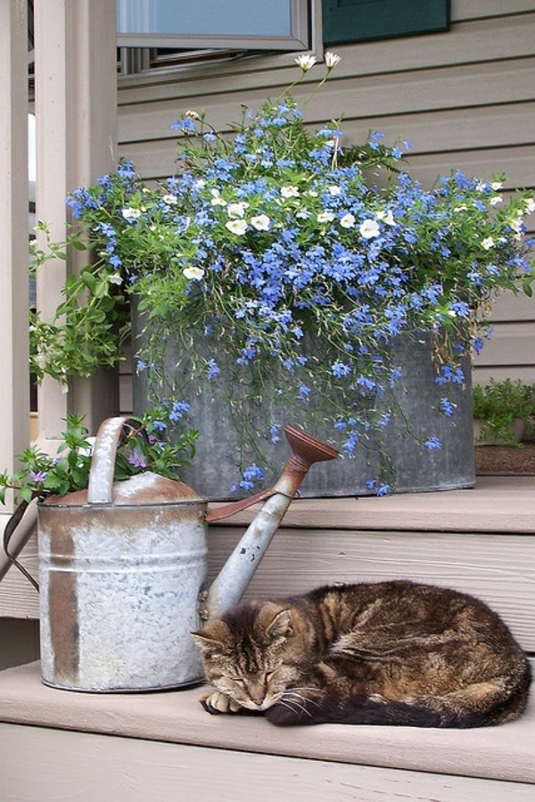 balkonpflanzen lobelien außenbereich gestalten