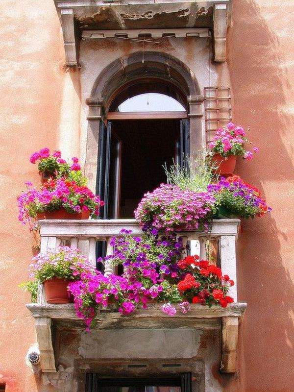 balkonpflanzen pflegeleicht petunien lila schöner kleiner balkon