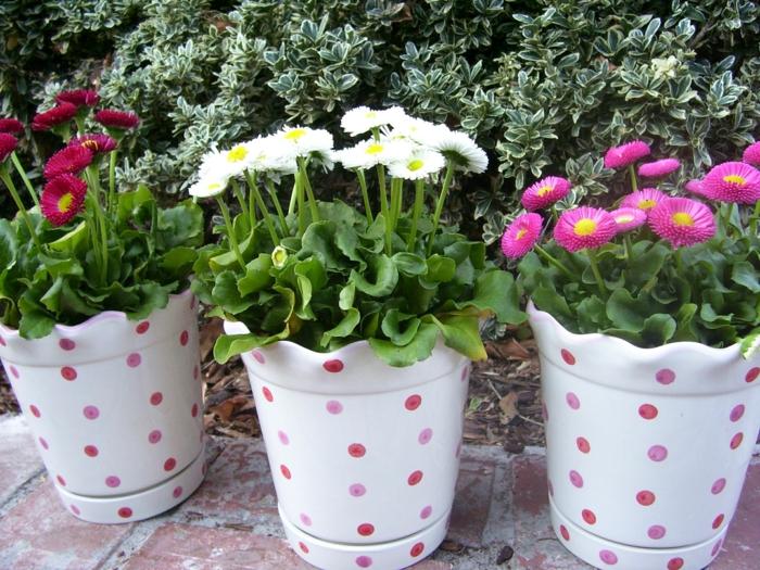 balkonpflanzen schöne blumentöpfe englische gänseblümchen farbig