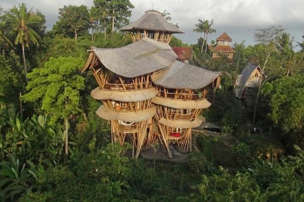 bambus holz harmonie natur palmen