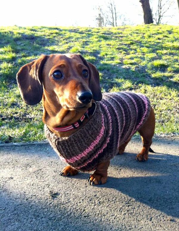 Free Dragon Knitting Pattern : Hundepullover selber stricken oder aus einem alten Pulli basteln