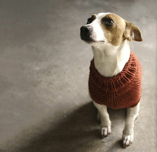 Knitted Dog Sweater Patterns Free For Small Dogs