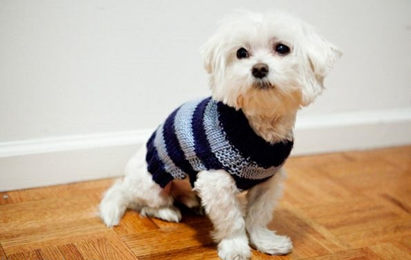 Free Easy Knitting Patterns For Medium Dog Jumpers : Hundepullover selber stricken oder aus einem alten Pulli basteln
