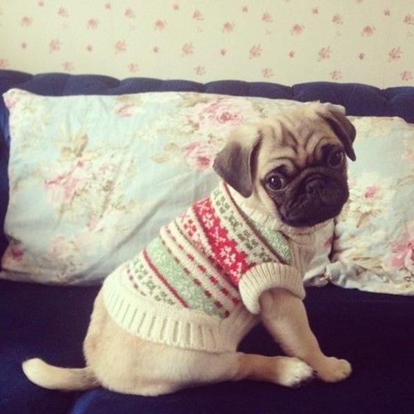 Hundepullover selber stricken oder aus einem alten pulli - Strickanleitung weihnachtspullover ...