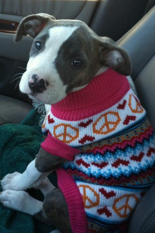 Hundepullover selber stricken oder aus einem alten Pulli basteln