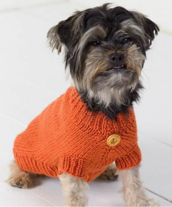 diy projekte hundepullover stricken orange