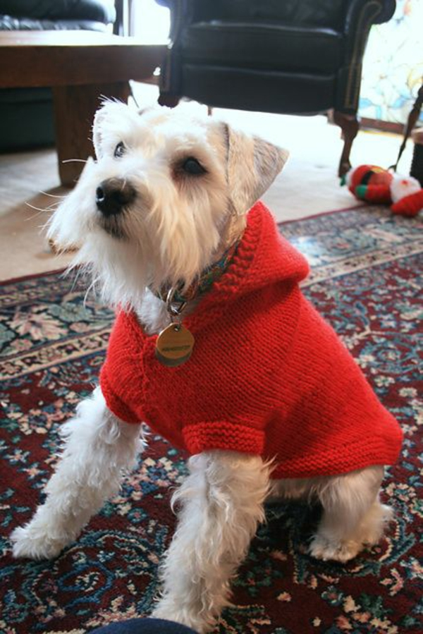 Knit Easy Dog Sweater Pattern Free