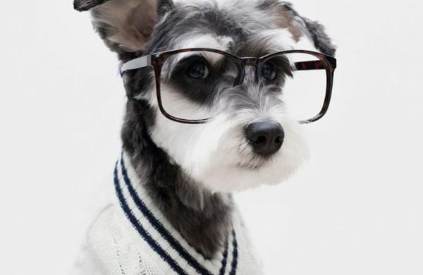 diy-projekte-hundepullover-selber-stricken-weiß-streng