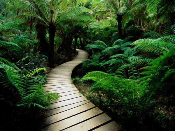 entspannungübungen bei stress natur bilder pflanzen
