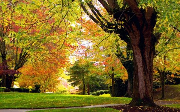 entspannungsübungen bei stress schöne bilder bewusstsein natur herbst