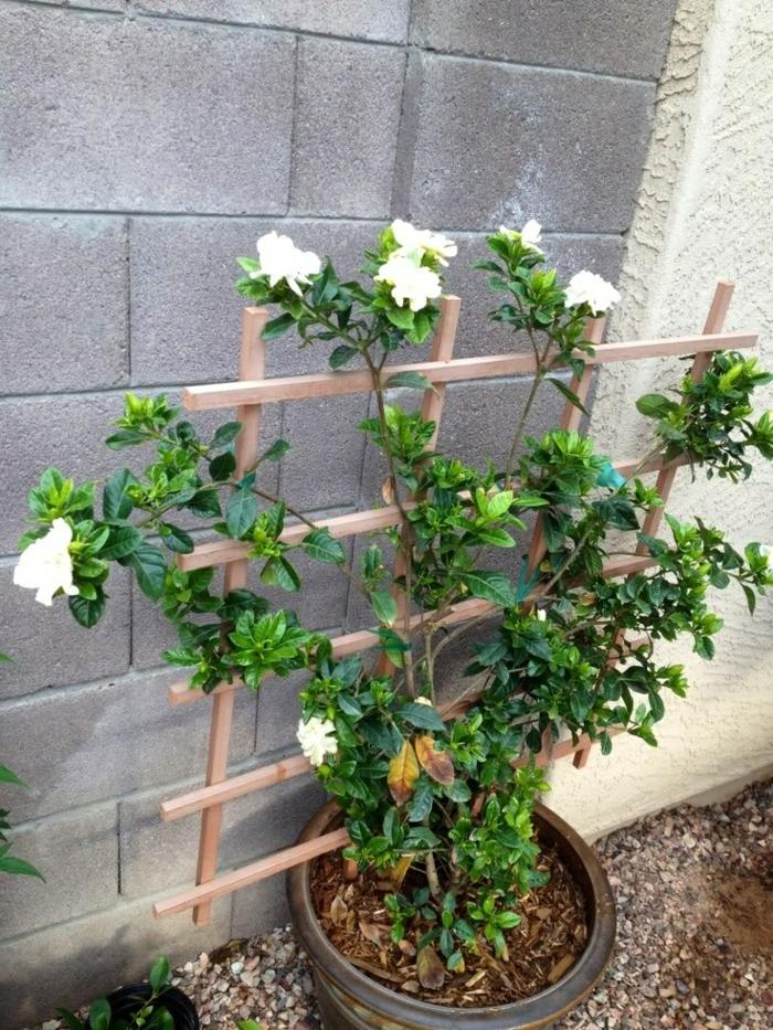 Gartenpflanzen -Durch Gardenien Einen Herrlichen Garten-Look Erreichen