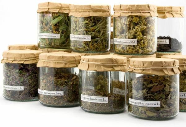 gesundes und langes leben kräuter und heilpflanzen