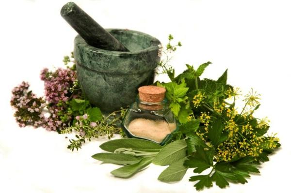 langes leben kräuter und heilpflanzen gesunde ernährung