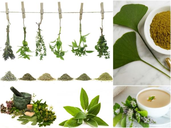 Langes Leben Welche Kräuter Und Heilpflanzen Sollten Sie Kennen  Küchenkräuter ...