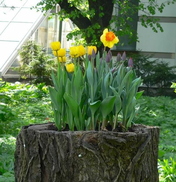 pflanztopf baumstumpf gelbe rote tulpen