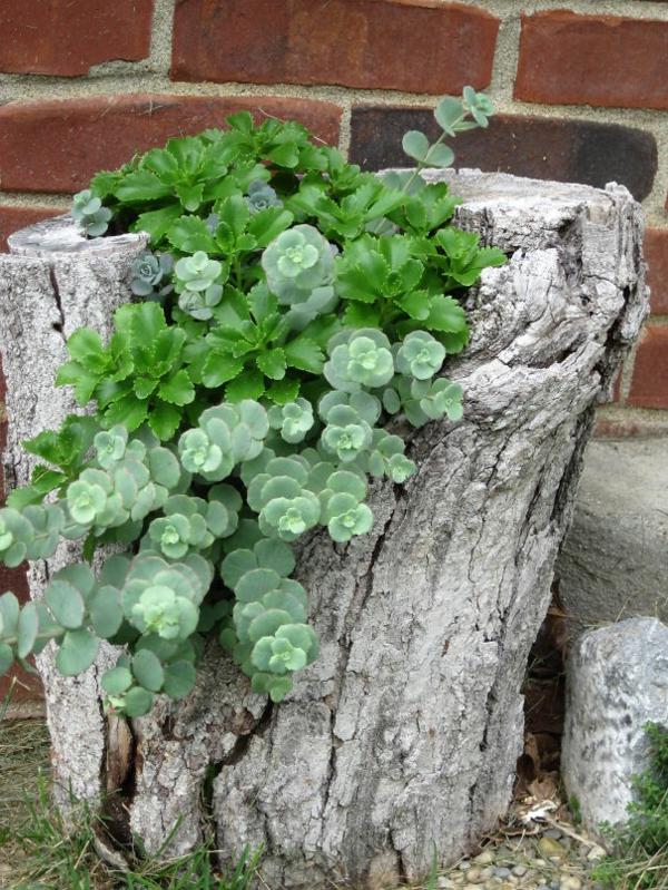 pflanztopf baumstumpf sukkulenten grüne pflanzen