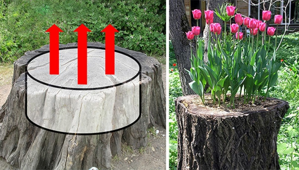 pflanztopf tulpen baumstumpf gartendekoration
