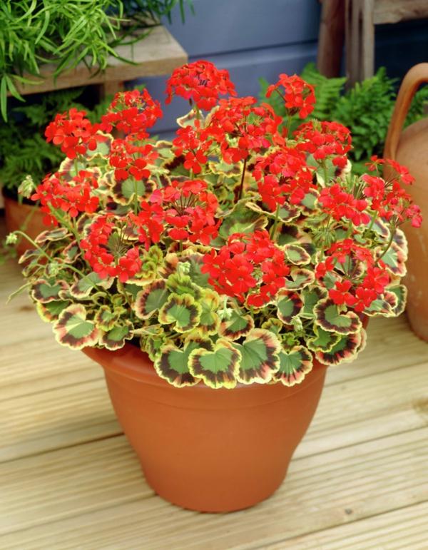 Pflegeleichte Balkonpflanzen ? Performal.info Hubsche Balkonpflanzen Pflegeleicht